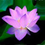 NEIGONG- Die Innere Alchemie